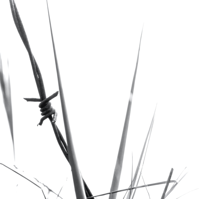 briznadolor2 copia